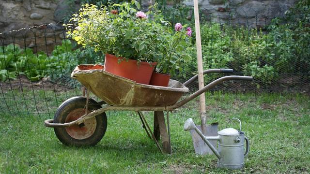 La_coltivazione_delle_rose