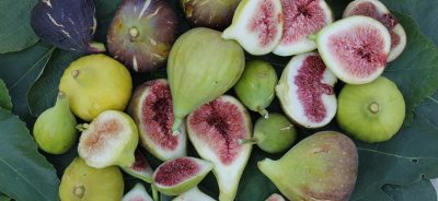 Frutti_antichi