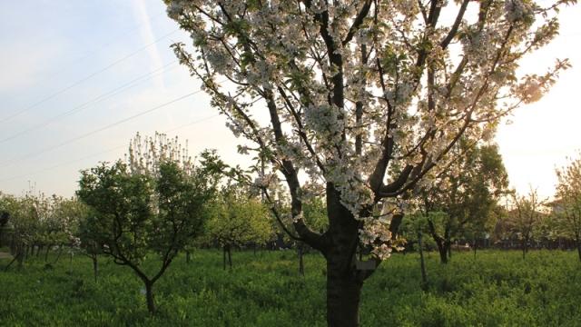 Giardino_botanico_Brescia
